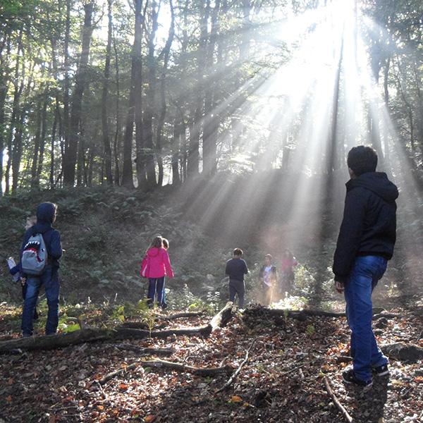 Wandergruppe im Wald bei Sonnenlicht, das durch die Bäume fächerförmig strahlt