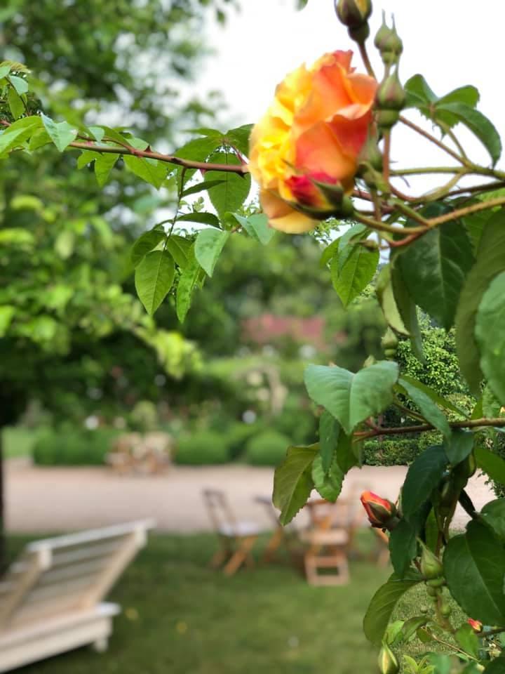 Blume in den Gärten von Schloss Ippenburg