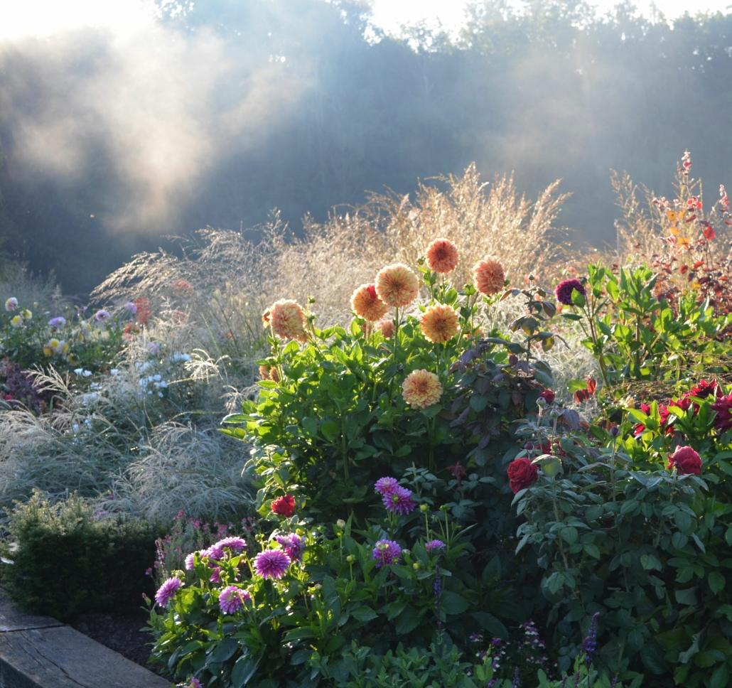 Rosenbüsche mit Nebel im Hintergrund